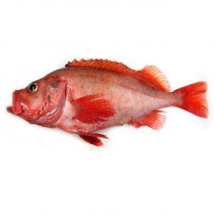 Peixe Vermelho M Inteiro